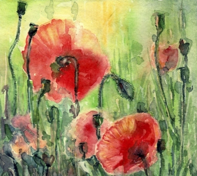 Poppies in summer