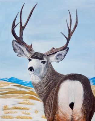 Mule Deer in the Prairies