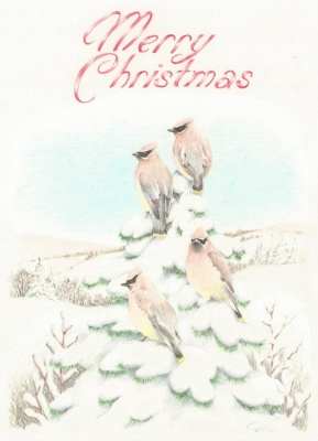 Waxwings Christmas