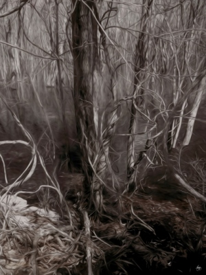 Vines in a Floodplain Forest